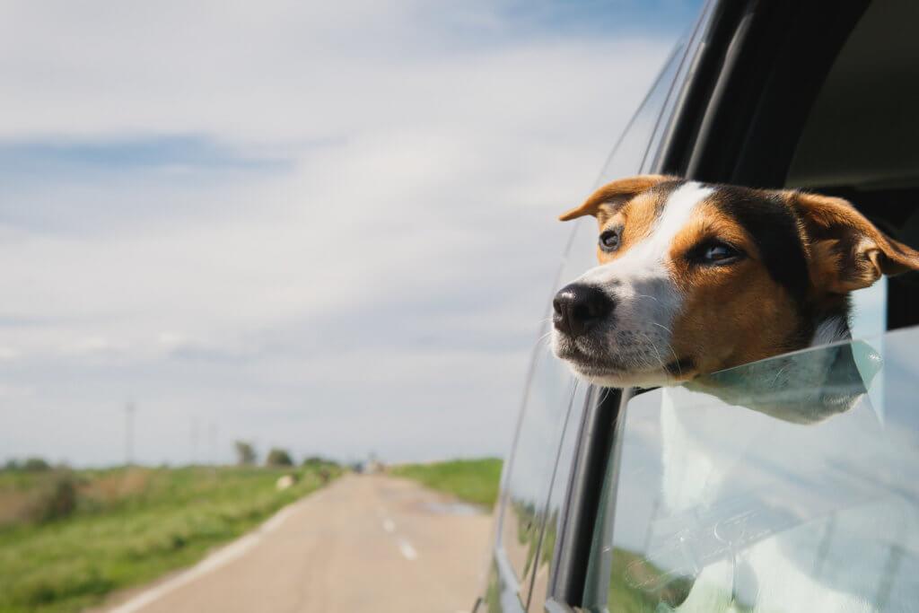 """מה חשוב לדעת בזמן הטסת כלבים מחו""""ל"""