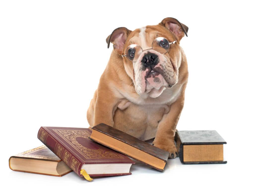 """מידע-למתעניינים-בנושא-יבוא-כלבים-מחו""""ל-והטסה-לארץ"""