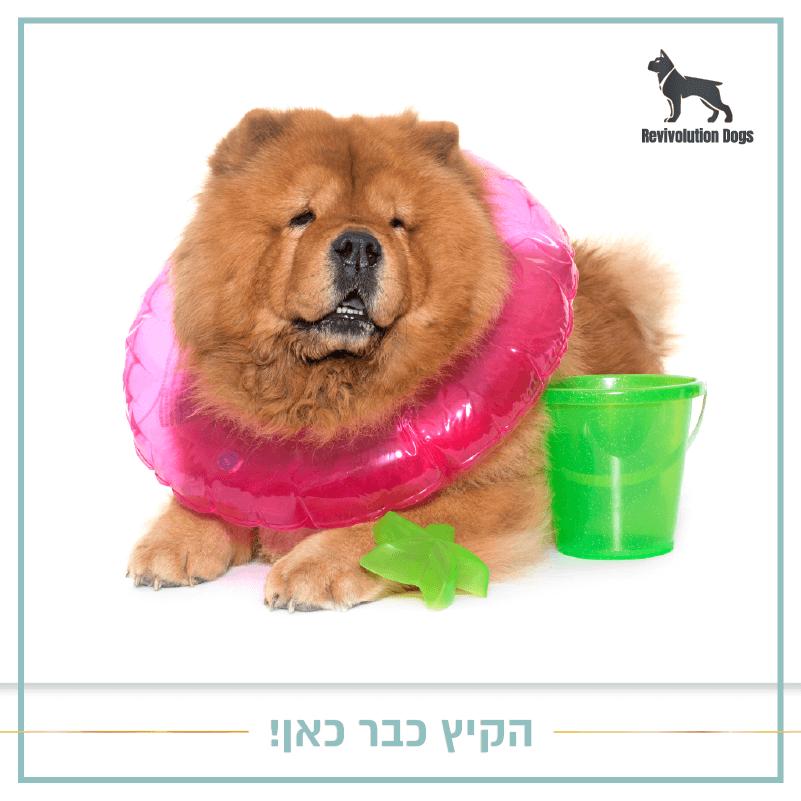 איך-לשמור-על-הכלב-בקיץ-רביבולושיין-דוגס